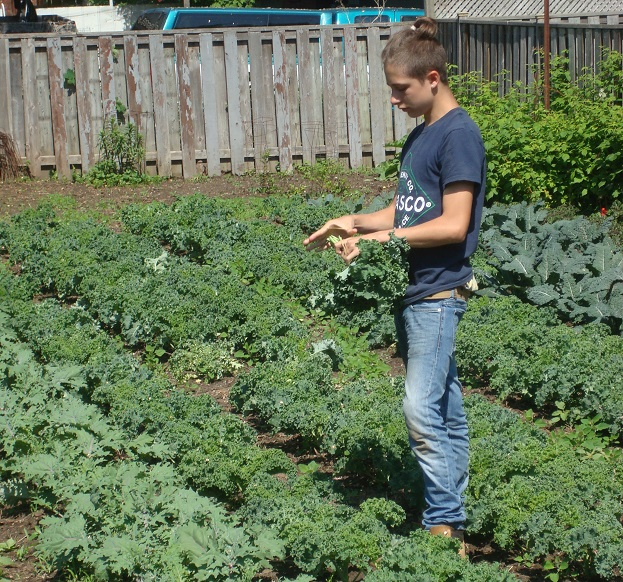 backyard-harvest-kale-local-soren-larger