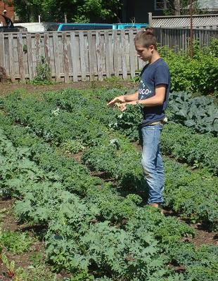 backyard-harvest-kale-local-soren