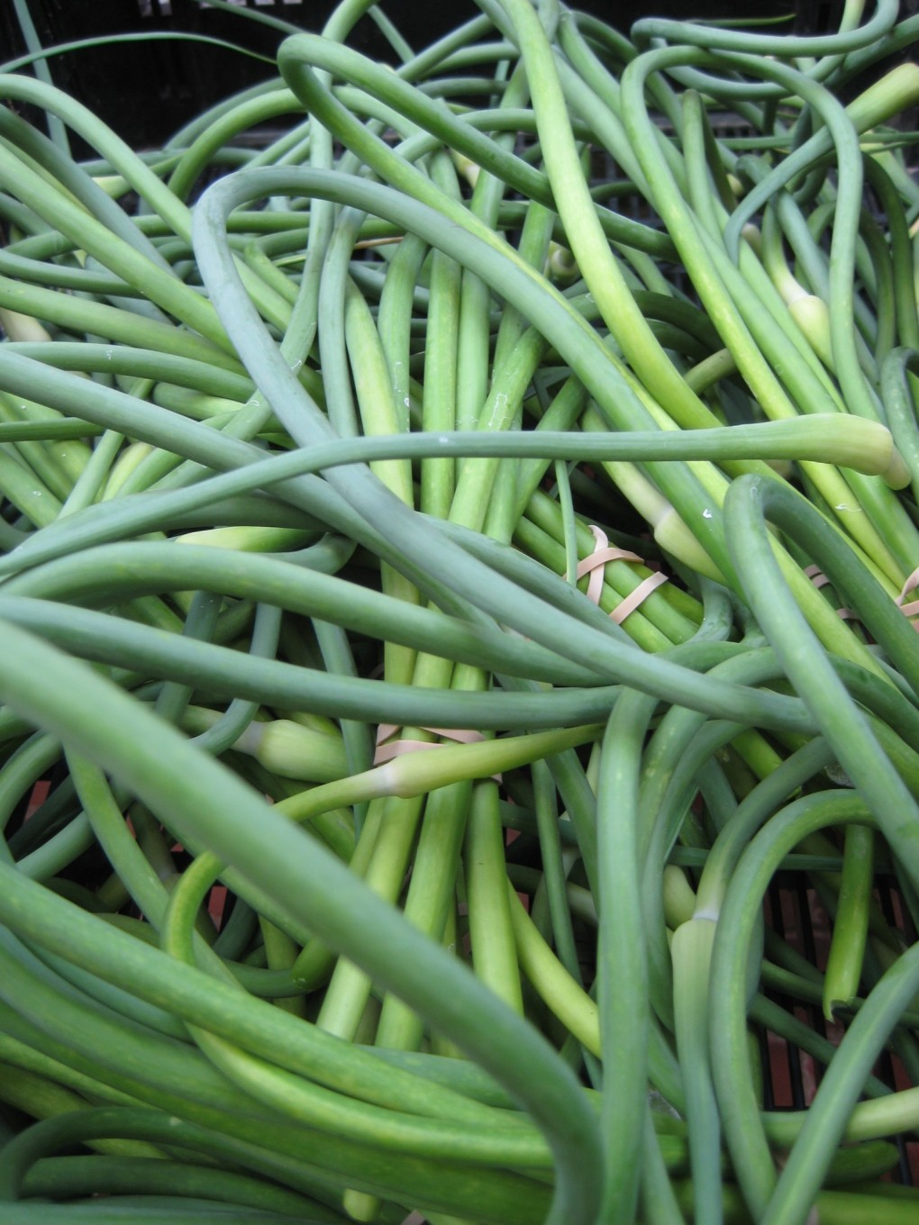 backyard-havest-Garlic-Scapes