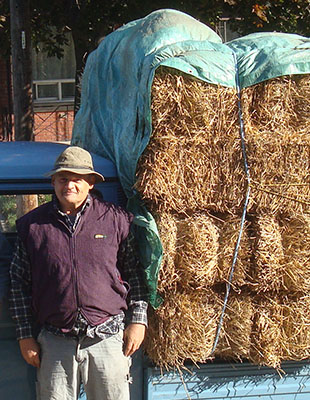 peter-backyard-harvest-hay